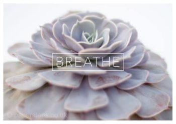 Breathe photo art of echeveria plant landscape