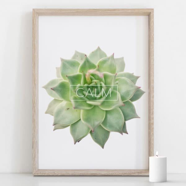 Succulent botanical wall art, echeveri green CALM typography