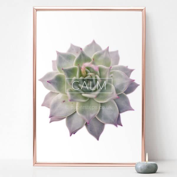 Calm text poster in rose gold frame on succulent echeveria plant