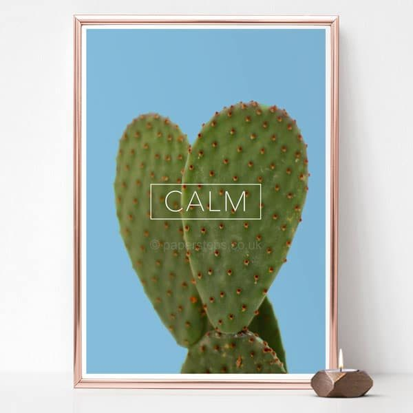 Calm poster on a succulent cactus wall art - Blue background