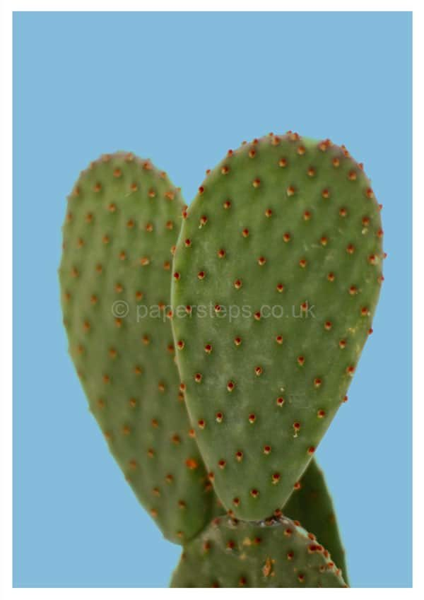 Cactus on plain blue background poster
