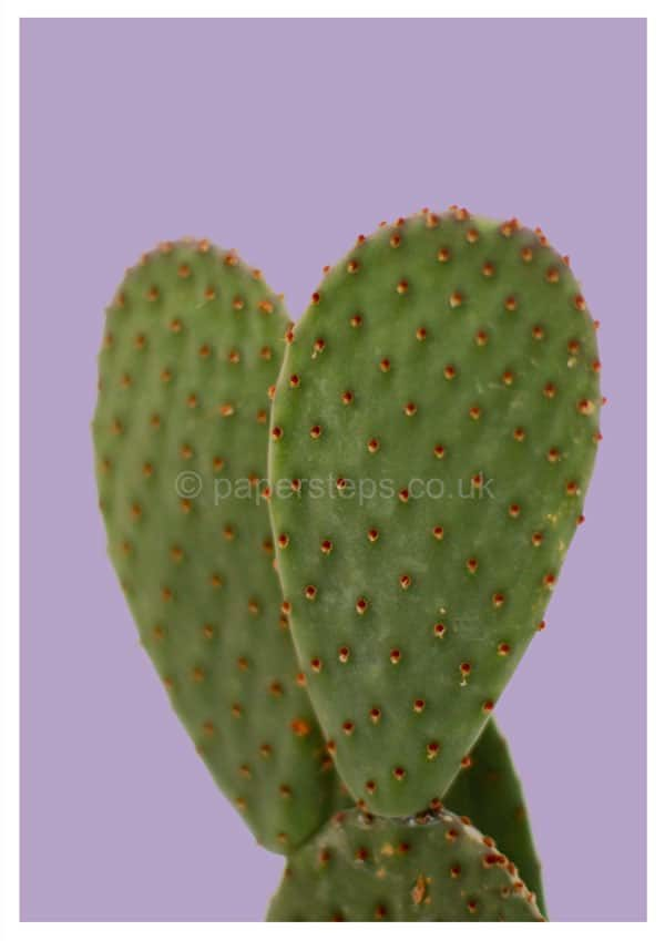 cactust poster print on purple background