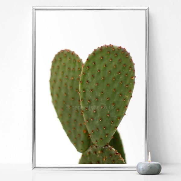 cactus photo on white background wall art silver frame